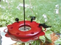 Picture of Backyard Nature Products 12 ounce Hummerfest Hummingbird Feeder