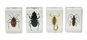 Picture of Celestron 3D Bug Specimen Kit #1