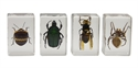 Picture of Celestron 3D Bug Specimen Kit #2