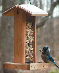 Backyard Nature Products Blue Jay Feeder
