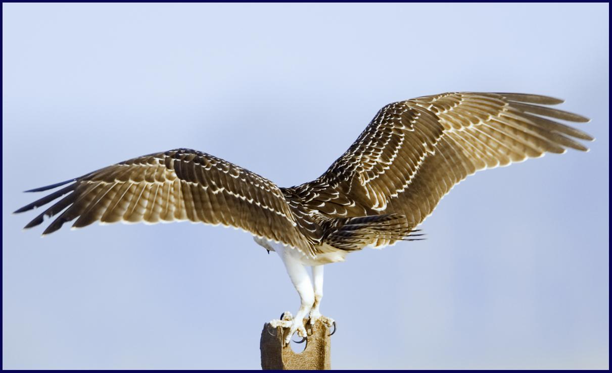bird wings spread - 1000×610