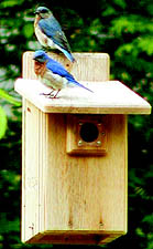 Backyard Nature Products Ultimate Bluebird House w/Viewing Window