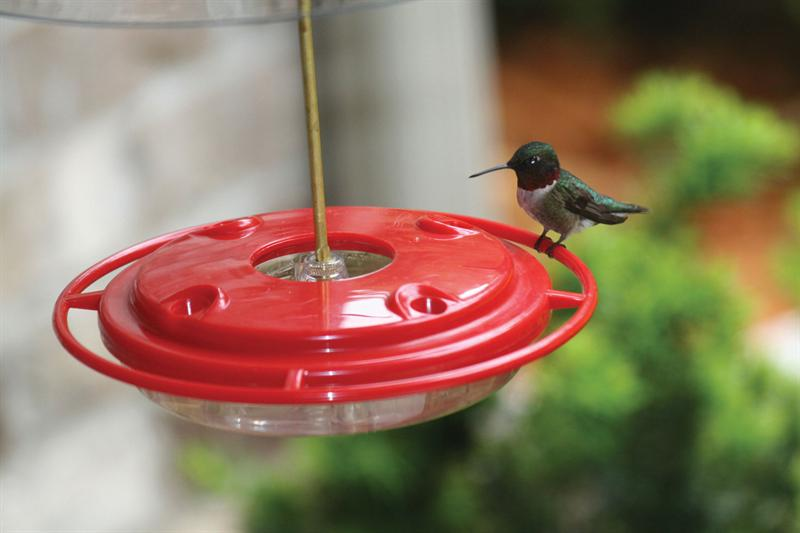 Backyard Nature Products 8 ounce Hummerfest Hummingbird Feeder