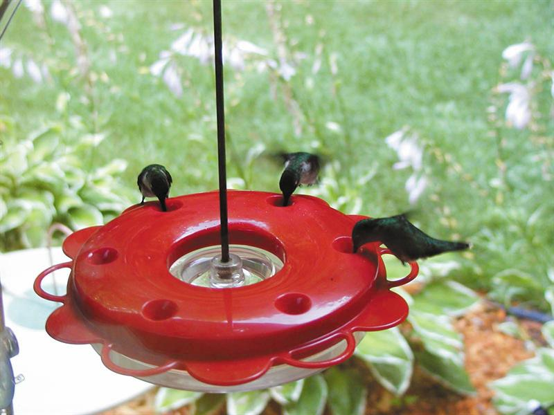Backyard Nature Products 12 ounce Hummerfest Hummingbird Feeder