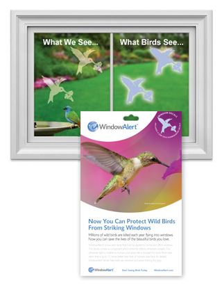 Window Alert Hummingbird Decal Envelope