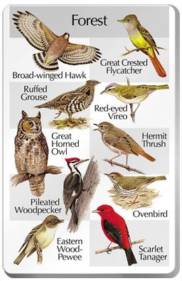 The SongBird IdentiFlyer Forest Songcard