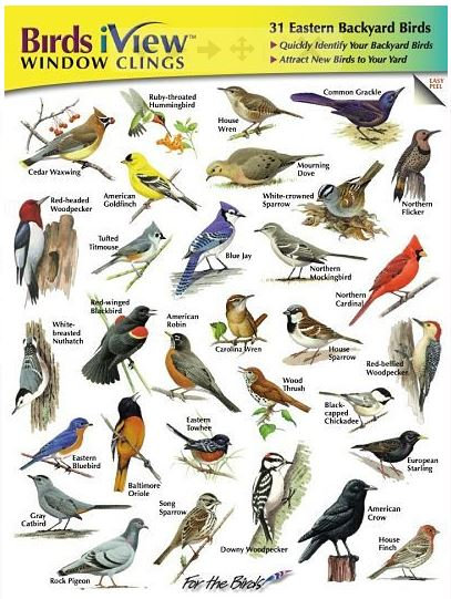 The SongBird IdentiFlyer Birds iView Window Clings